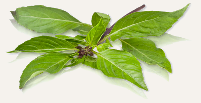 Beautiful Basil Sprigs for Coconut Curry | meljoulwan.com